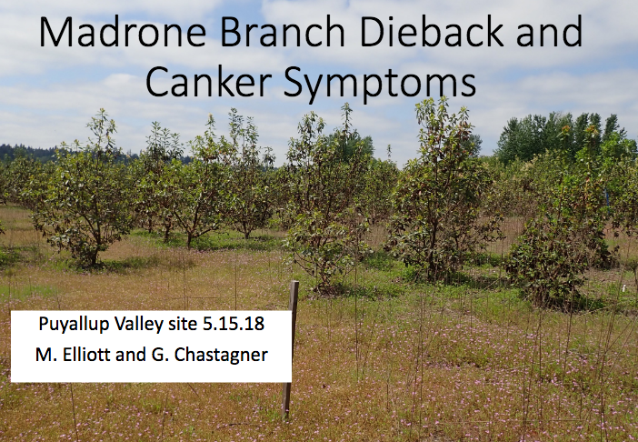 Madrone Disease Presentation Cover Slide