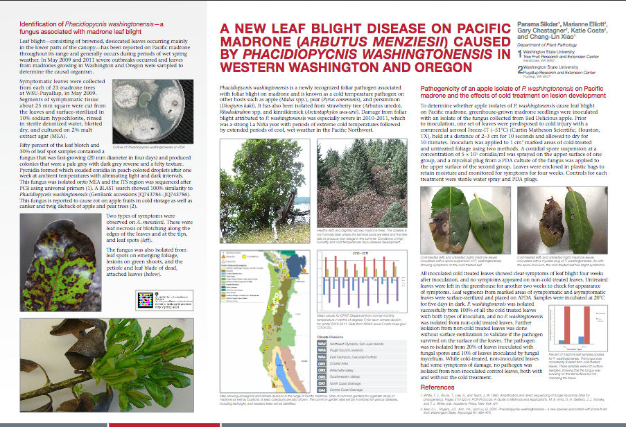 Madrone Leaf Blight Poster