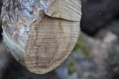 Internal fungal wood staining