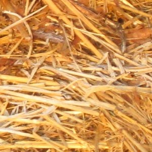 Straw compost feedstock photo.