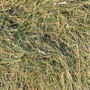 Green Grass compost feedstock