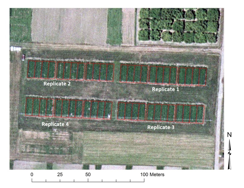 Overhead photo of Organic Farming Systems field showing different crops outlined by red lines.
