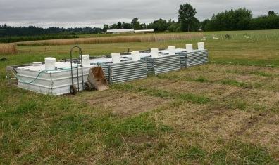 Photo of asture Poultry Cage, showing grazed areas behind cages.