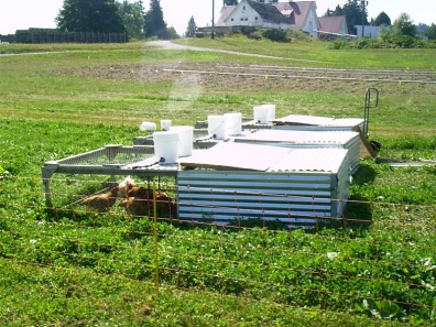 Photo of Pasture Poultry Cages in field showing water buckets on top.