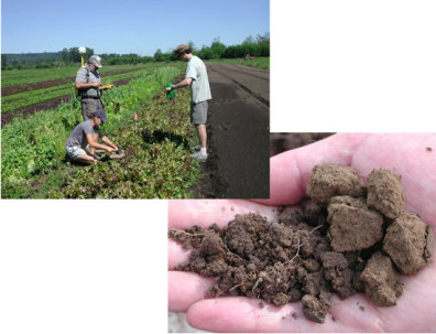 Soil Quality, soil peds
