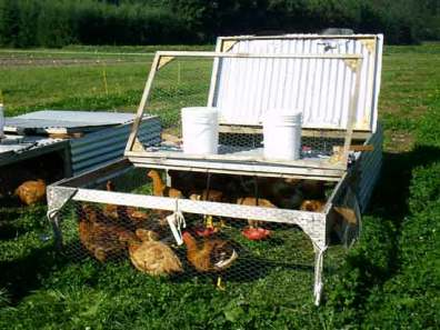 Photo of pasture Poultry Cage with slow growing cornish cross, cage lids open.
