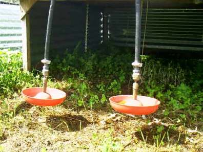Photo of pasture Poultry Cage, hanging bell waterers.