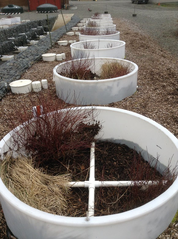 Photo of Mesocosm rain garden research units for studying suitability of various soil mixes for rain gardens.