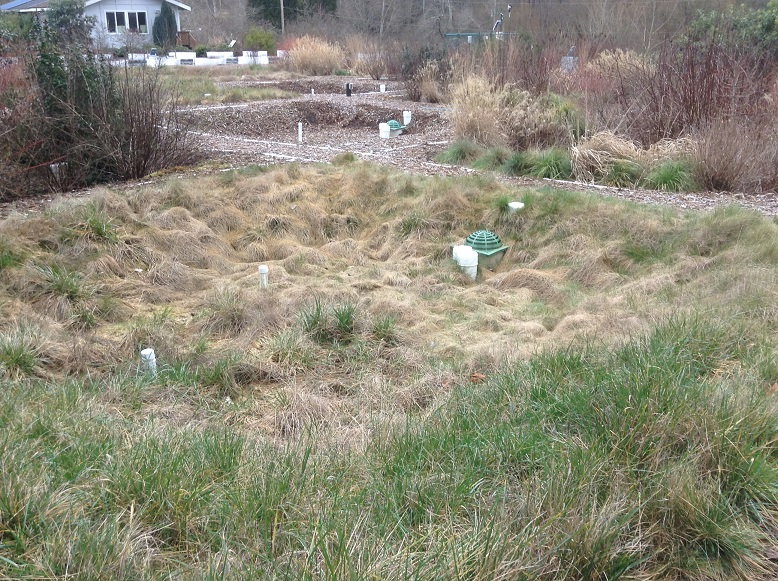 Photo of research on various vegetation types on rain garden effectiveness at WSU Puyallup.