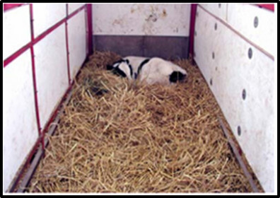 calf in hutch 9 2015