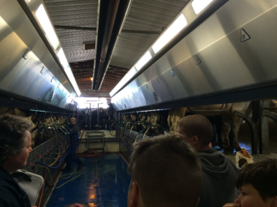 Tour members in the foreground look down a long aisle as cows are milked on either side.