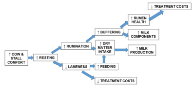 Flow chart listing factors impacting cow comfort.