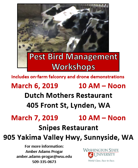 Class flyer featuring birds covering piles of feed next to cows.
