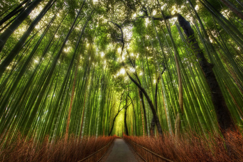 Photo of bamboo forest outside Kyoto, by Trey Ratcliff