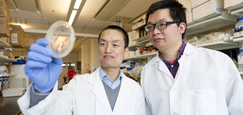 Assistant Professor Zhaokang Cheng does research in the WSU College of Pharmacy