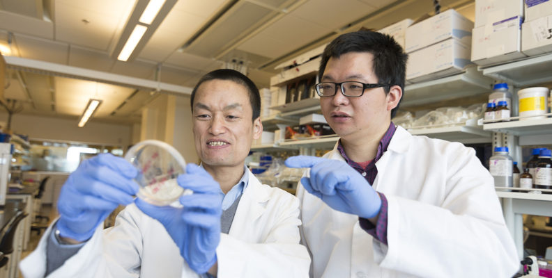 Zhaokang Cheng (left) in his lab