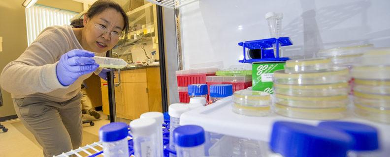 researcher Jingru Sun