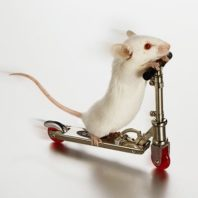 mouse on a tiny scooter