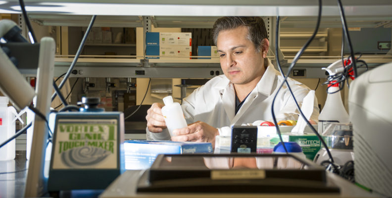 Marcos Frank is shown working in his lab on the WSU Health Sciences Spokane campus.