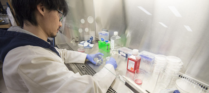 A research staff member works with lab chemicals under a hood