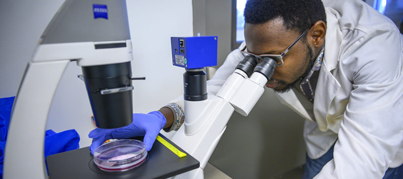 A PhD student looks at a cell culture under a microscope