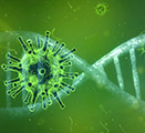Image shows a coronavirus spike protein inside a DNA helix