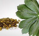 Photo of goldenseal leaf and root