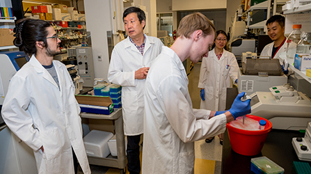 Aging researcher Jiyue zhu talks to members of his research laboratory on the WSU Health Sciences Spokane campus