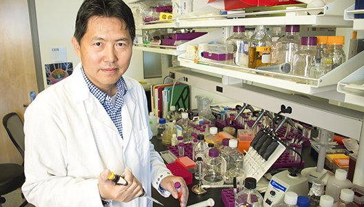 Portrait image of Zhenjia Wang, associate professor in the WSU College of Pharmacy and Pharmaceutical Sciences