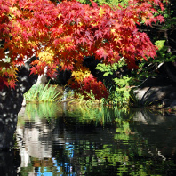 Autumn-colored tree branch overhanging Jewett Pond