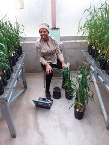 WSU sophomore Esther Rugoli works in the greenhouse on a research project.