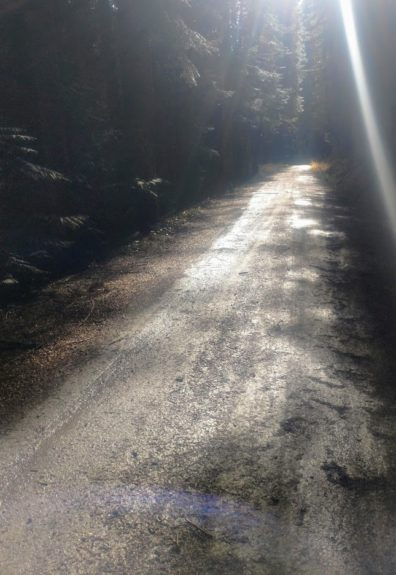 A sunlit, dusty road in the woods.