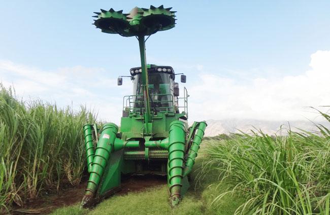 wsu  hawai u2019i developing biofuel solution