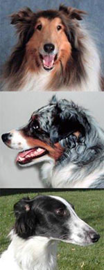 affected breeds