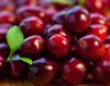 cranberries-closeup-100x80p