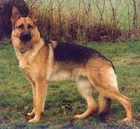 dog-200px