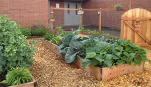 school-garden-400