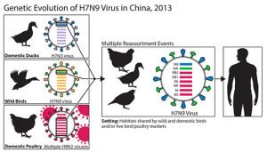 how-flu-mutates-550