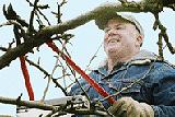 pruning-160