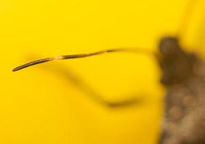 Bug-antenna-350