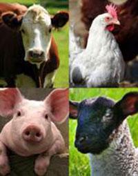 livestock-composite-photo-200
