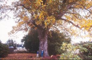 bush-tree-500