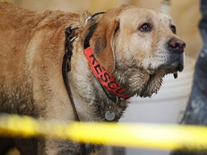 dog-mudslide-350