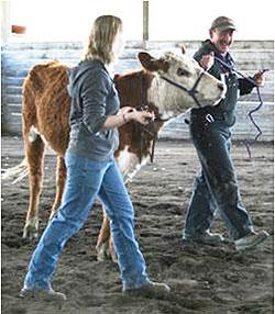 livestock-250