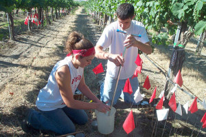 WSU-viticulture-and-enology-students-500
