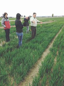 wheat-field-250