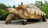 tortoise-170