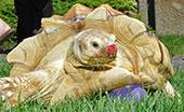 tortoise-180