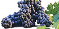 grapes-200