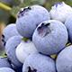 blueberries-80